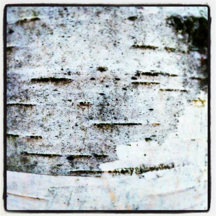 kora drzewa faktura