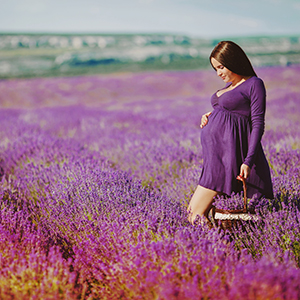 Pregnant woman gathering flowers lavender.