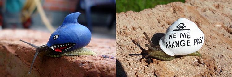 Inner City Snails
