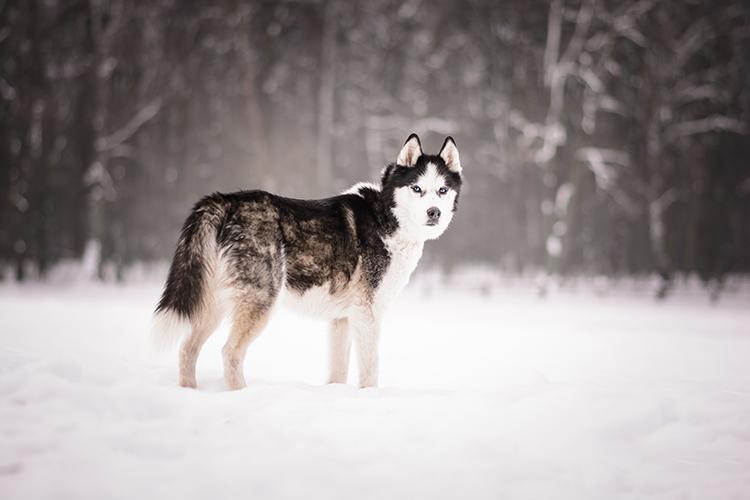 Poradnik jak fotografować zwierzęta - fotografia zwierząt