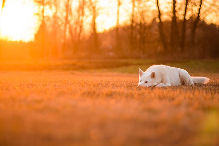 fotografia zwierząt poradnik
