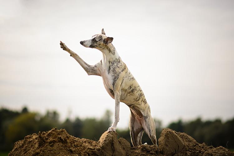 fotografia zwierząt leśnych i domowych - poradnik dla początkujących
