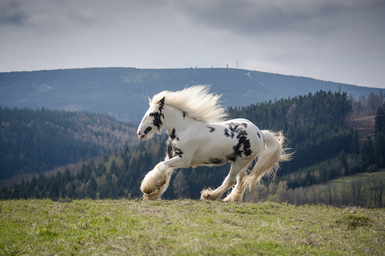 porady jak fotografować zwierzęta