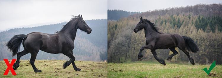 fotografia zwierząt