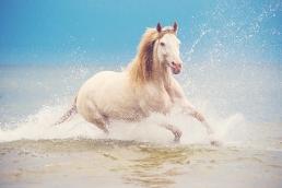 fotografia zwierząt - poradnik dla początkujących