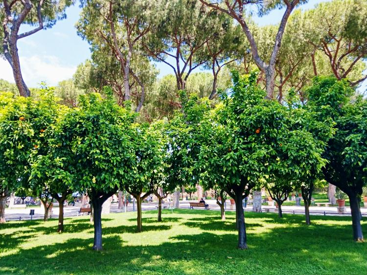 ogród pomarańczowy w Rzymie
